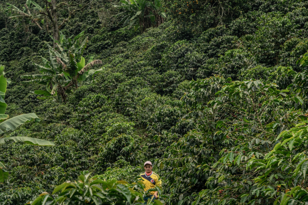 colombia-coffee-climate-fairtrade